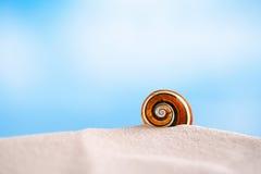 Os shell brilhantes do polymita na areia branca da praia sob o sol iluminam-se Imagem de Stock