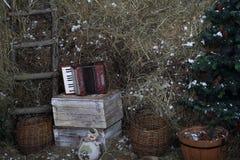 Os shell com cones do pinho e porcas sob abetos cobertos de neve fotografia de stock
