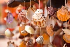 Os shell do mar fecham-se acima Foto de Stock