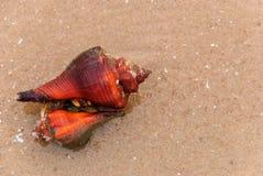 Os shell do vermelho Fotografia de Stock