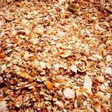 Os shell no Mar Negro Imagens de Stock Royalty Free