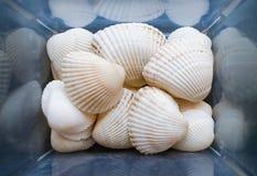 Os shell s?o encontrados em nossas praias de descascamento Opini?o do close-up das conchas do mar na caixa Conceito marinho imagens de stock