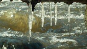 Os sincelos molham o rio Morava na mágica congelada inverno e no branco mágico, timelapse, pendurando da saliência, fluindo para  filme