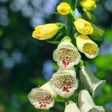 Os sinos das flores fecham-se acima Flores no jardim fotografia de stock