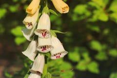 Os sinos das flores fecham-se acima Flores no jardim foto de stock royalty free