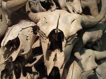 Os skullls do búfalo Cabeça-Despedaçar-no búfalo saltam imagens de stock royalty free
