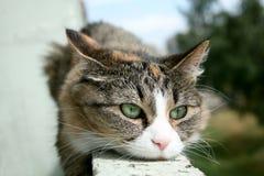 Os sonhos sérios do gato da vida Fotos de Stock