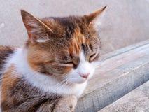 Os sonos bonitos do gato Imagem de Stock