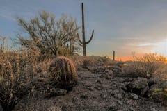 Os sonos do deserto Imagem de Stock