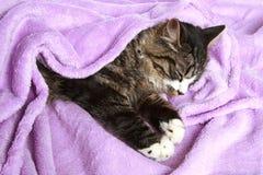 Os sonos do gato cobriram o cobertor macio Fotografia de Stock