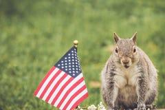 Os sorrisos e as poses orientais de Gray Squirrel aproximam a bandeira dos EUA no ajuste do jardim do vintage foto de stock royalty free