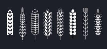 Os Spikelets ou as orelhas do ponto da grão do trigo vector ícones ilustração do vetor