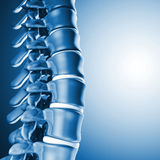 Os spinal humain 3d Images libres de droits
