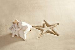 Os starfish da praia imprimem a areia do Cararibe branca do escudo Foto de Stock