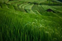 Os terraços bonitos do arroz de Jatiluwih em Bali, Indonésia Imagens de Stock Royalty Free