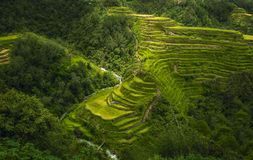 Os terraços da natureza Imagem de Stock Royalty Free
