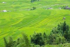 Os terraços do arroz colocam na estação de Rainning em Tule Fotografia de Stock Royalty Free