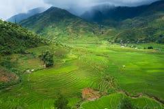 Os terraços do arroz colocam na estação de Rainning em Tule Imagem de Stock