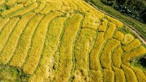 Os terraços os mais bonitos do arroz em pouca aldeola de terraços de rolamento do arroz foto de stock