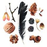 Os tesouros da natureza ilustração royalty free
