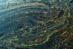 Os testes padrões abstratos do fundo do pólen espanam na água verde Fotos de Stock