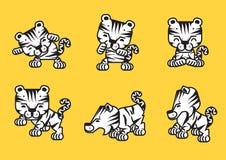 Os tigres ajustaram-se Imagens de Stock Royalty Free