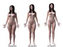 Os tipos de corpo fêmea ilustração do vetor