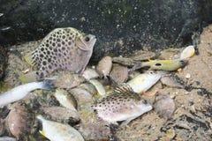 Os tipos diferentes dos peixes são fechados junto em uma poça Fotos de Stock