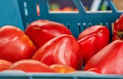 Os tomates maduros vermelhos vendem no mercado dos fazendeiros do dia do outono nas caixas plásticas azuis com outros vegetais Imagem de Stock
