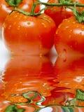 Os tomates na filial com água deixam cair com reflexão fotografia de stock royalty free