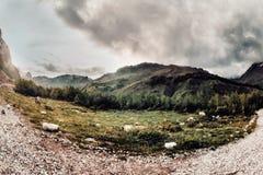 Os touros e as vacas caucasianos na montanha pastam no intervalo perto do Monte Elbrus em um fundo de rochas bonitas Imagens de Stock