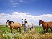 Os três amigo Foto de Stock
