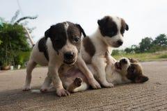 Os três cães & animais do bebê tão bonitos Imagens de Stock