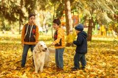 Os três meninos pequenos jogam emocionalmente com o grande Labrador branco d Fotos de Stock Royalty Free