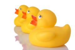 Os três patos Fotografia de Stock Royalty Free