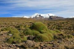 Os três picos do coropuna do vulcão no Peru andino das montanhas fotografia de stock