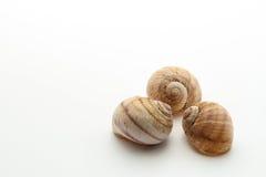 Os três shell Fotografia de Stock Royalty Free