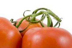 Os três tomates Fotografia de Stock Royalty Free