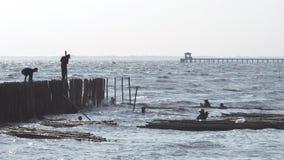 Os trabalhadores alinharam as varas de bambu para a proteção a erosão litoral filme