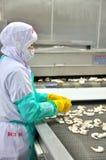 Os trabalhadores estão arranjando camarões em uma linha à máquina de congelação em uma fábrica do marisco em Vietname Fotos de Stock Royalty Free