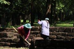Os trabalhadores estão cancelando ervas daninhas que a grama para renova a área do local arqueológico na cidade antiga de Sri The fotos de stock