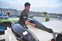 Os trabalhadores estão carregando o atum no caminhão à fábrica do marisco na cidade de General Santos Foto de Stock Royalty Free