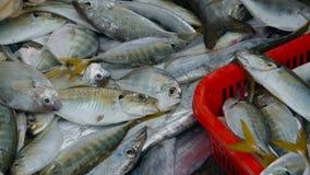 Os trabalhadores estão classificando peixes video estoque