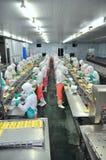 Os trabalhadores estão trabalhando duramente em uma linha de produção em uma fábrica do marisco na cidade de Ho Chi Minh, Vietnam Imagem de Stock