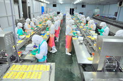 Os trabalhadores estão trabalhando duramente em uma linha de produção em uma fábrica do marisco na cidade de Ho Chi Minh, Vietnam Imagens de Stock