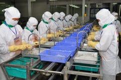 Os trabalhadores estão trabalhando em uma fábrica de tratamento em Hau Giang, uma província do camarão no delta de Mekong de Viet Imagens de Stock