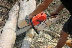 Os trabalhadores estão usando árvores de um sawing da serra de cadeia Imagens de Stock