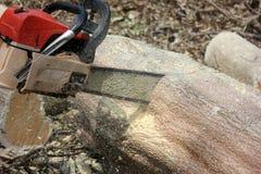 Os trabalhadores estão usando árvores de um sawing da serra de cadeia Imagem de Stock Royalty Free