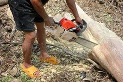 Os trabalhadores estão usando árvores de um sawing da serra de cadeia Fotos de Stock