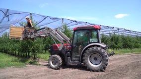 Os trabalhadores no pomar de maçã estão instalando a anti rede da saraiva usando o trator vídeos de arquivo